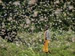 Reading: Climate Change and Locust Swarms