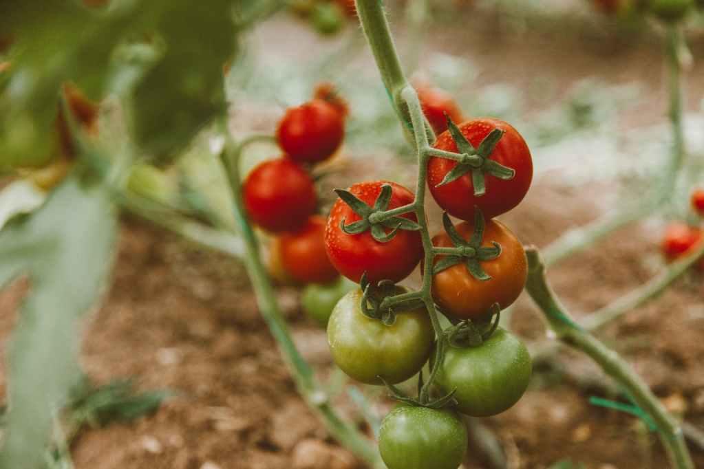 food summer garden agriculture