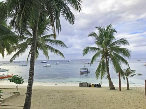 bohol palm tree philippines