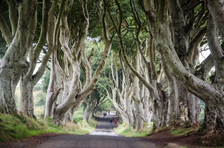 dark hedges irlande
