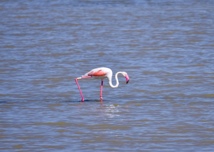flamingos_0461