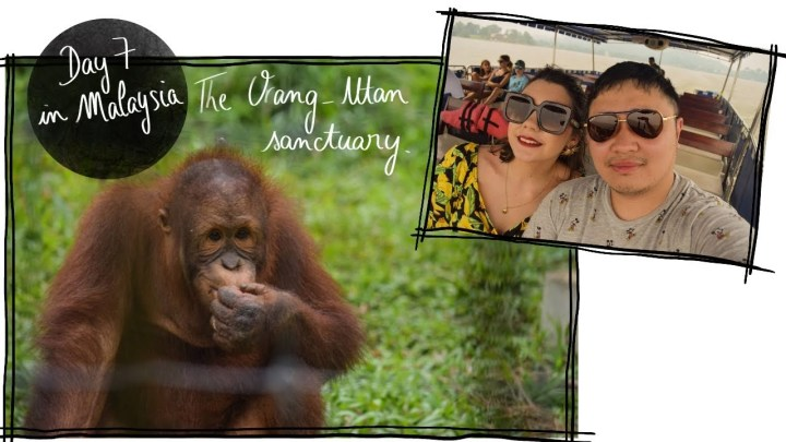 VLOG – The orang utan sanctuary Malaysia Day 7