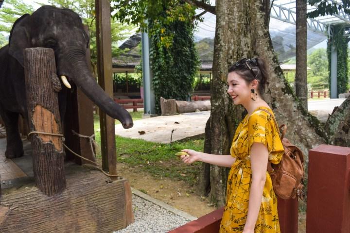 # Malaysia Day 9 – Kuala Gandah  Elephant sanctuary – September 19