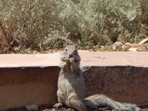 A much more noteworthy picture of a squirrel at the Grand Canyon . . . he's begging you not to waste your time, money, or sanity driving through the Arizona desert- just go to Utah instead!