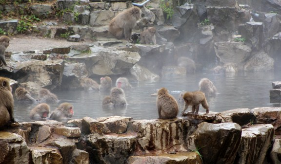 A Monkeys.JPG
