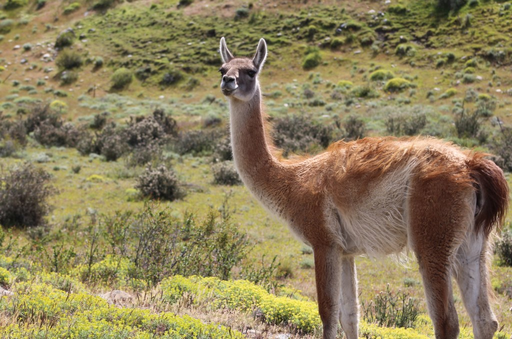 The Patagonia Chronicles Part 2: Is That Really Another Guanaco?