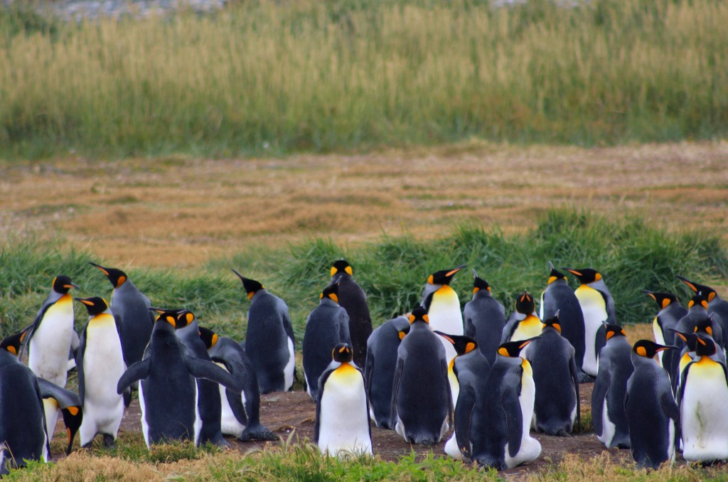 Wild Penguins: The Last Patagonia Chronicle, Part 5