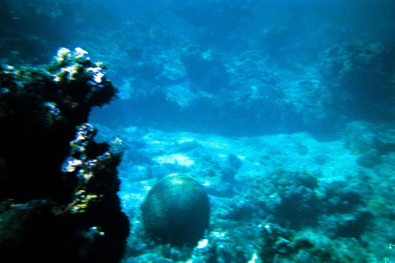snorkel 2.jpg