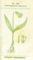 Rafinesque 1828