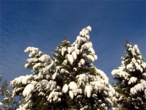Snow Day in North Carolina