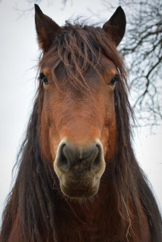 Si chiude la disputa sul dominio walmart.horse: restituito ai detentori del marchio (News, Mondo Domini)