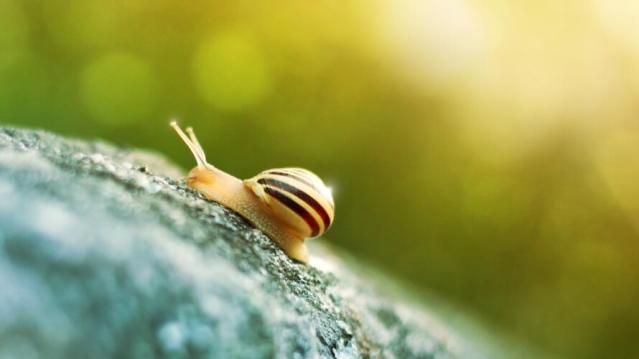 Che cosa sono gli slug di WordPress (Guide, Zona Marketing)