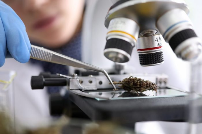 CANNABIS RESEARCH IN AMERICA underway as cannabis is put under test tube