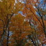 Fall_colors_Huntsville_2004-10-1166