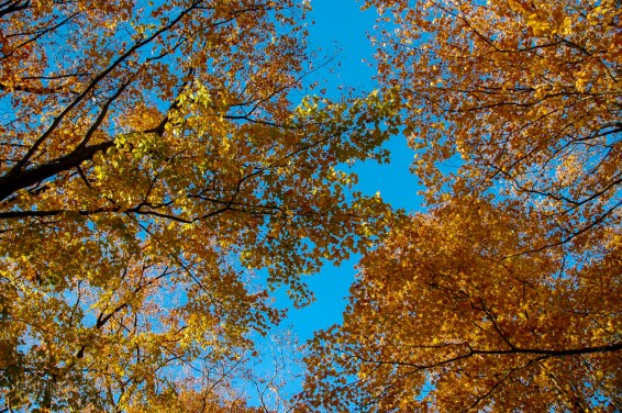 Fall_colors_trees_leaves 08-10-2006 5-48-54 PM