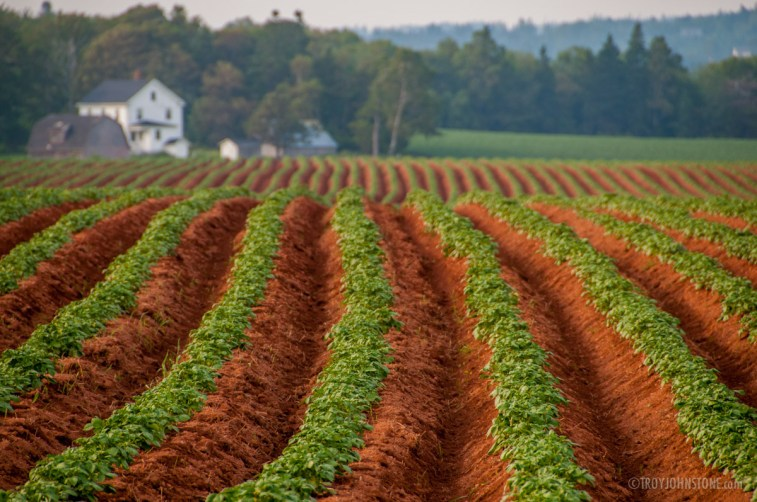 The iconic red dirt of Prince Edward Island, along with their famous potatoes. All I need is Anne walking in the background and I have it all in this one shot.