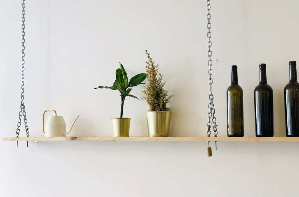 15 medicinal plants that you should have in your house