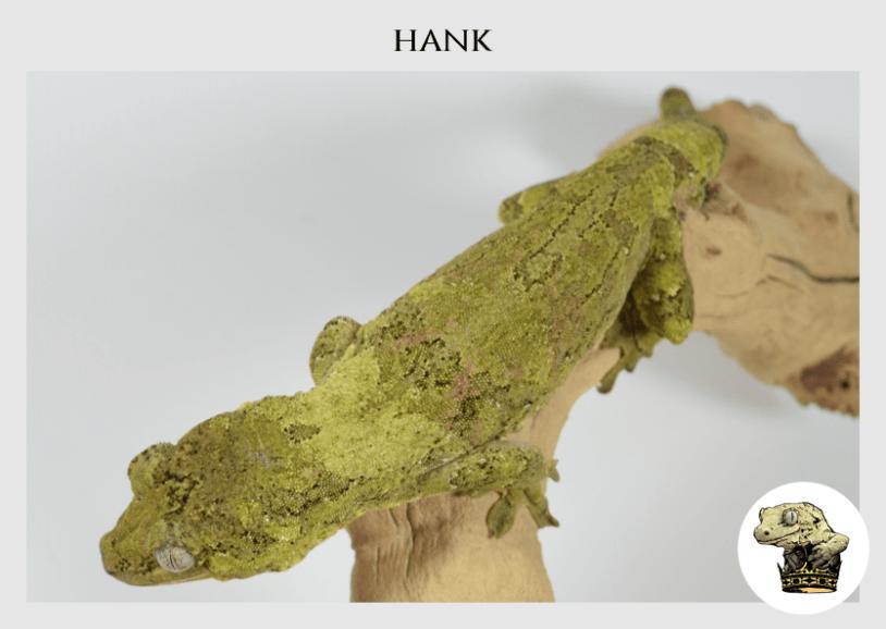 (3) Hank