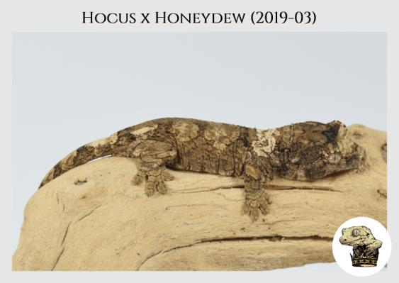 (4) Hocus x Honeydew (2019-03)