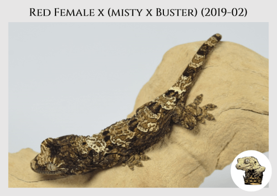 (4) Red Female x [Misty x Buster] (2019-02)