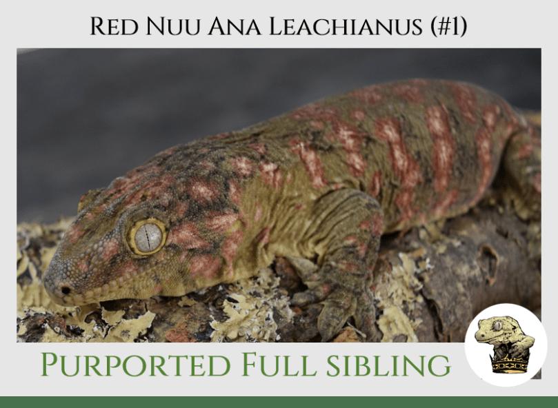 (4) Red Nuu Ana Leachianus
