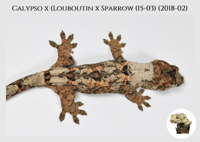 (5) Calypso x [Louboutin x Sparrow (15-03)] (2018-02)