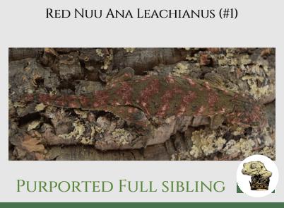 (5) Red Nuu Ana Leachianus (2017)