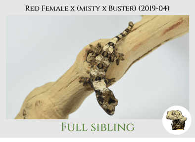 (6) Red Female x [Misty x Buster] (2019-04)