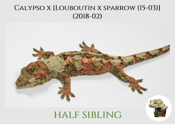(8) Calypso x [[Louboutin x Sparrow (15-03)] (2018-02)