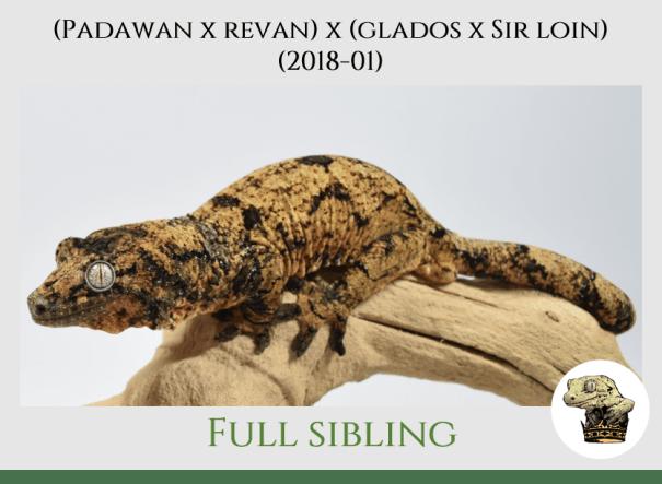 (8) [Padawan x Revan (F)] x (Glados x Sir Loin) (2018-01)