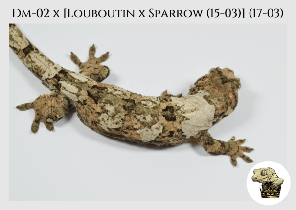 (l11) DM-02 x [Louboutin x Sparrow (15-03)] (17-03)