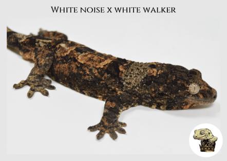 (l19) White Noise x White Walker