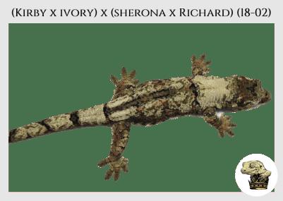 (l3) (Kirby x Ivory) x (Sherona x Richard) (18-02)