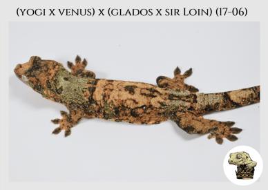 (l6) (Yogi x Venus) x (Glados x Sir Loin) (17-06)
