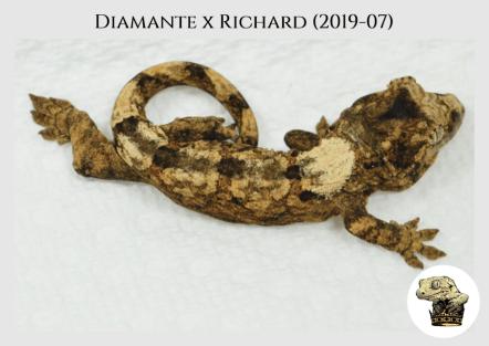 Diamante x Richard (2019-07) (2019-10-05) WM (2)