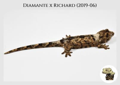 Diamante x Richard (2109-06) (2020-02-15) WM (4)