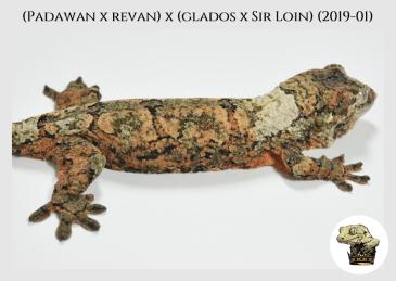 (Padawan x Revan) x (Glados x Sir Loin) (2019-01) (2019-11-24) WM (2)