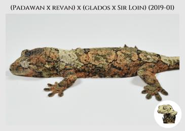 (Padawan x Revan) x (Glados x Sir Loin) (2019-01) (2019-11-24) WM (3)