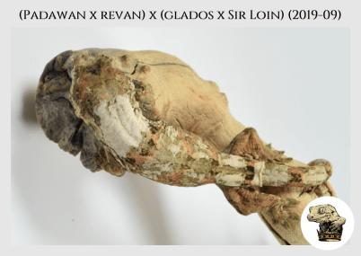 (Padawan x Revan) x (Glados x Sir Loin) (2019-09) WM (2020-02-29) (5)