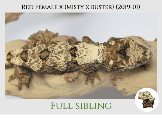 Red Female x [Misty x Buster] - Sibling Pic