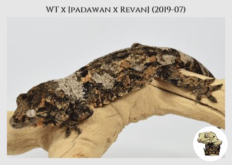 WT (19-07) WM (2020-05-11) (5)