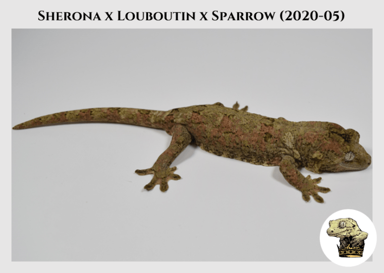 3 - Sherona (2020-05) WM