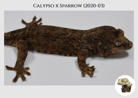 Calypso (2020-03) (2021-01-27) WM (3)