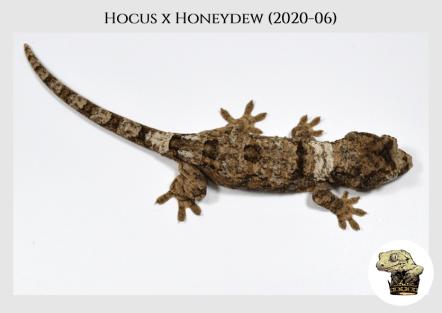 Hocus (2020-06) WM (4)