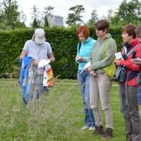 Edible wild plants workshop