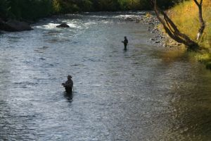Fly fishing at Mayberry Park on the Truckee River