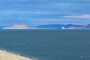 Anaho Island National Wildlife Refuge in Pyramid Lake provides nesting for the American White Pelican.