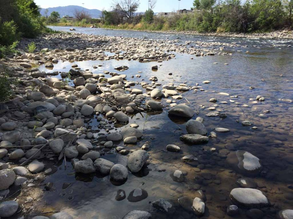 Truckee River in the Truckee Meadows in Summer 2015