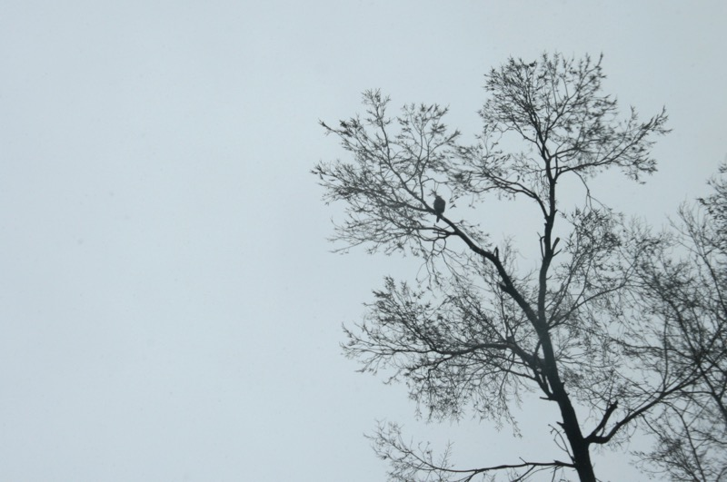 The silhouettes of hawks were easy to spot against the overcast skies. Feb. 28, 2015.
