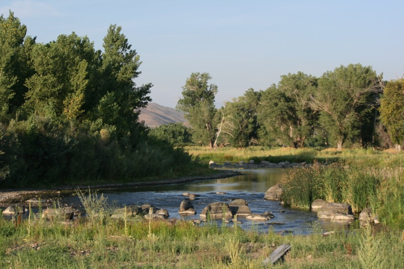 The Truckee River, Mustang Ranch Preserve. 6 Aug, 2015.